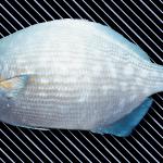 etc_fish_05