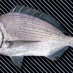 etc_fish_23