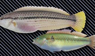 etc_fish_24